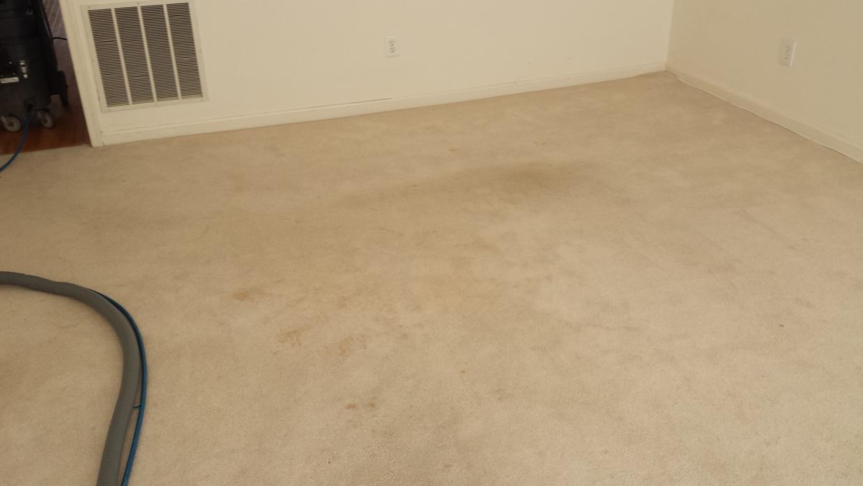 Blog Carpet Cleaning Pentagon
